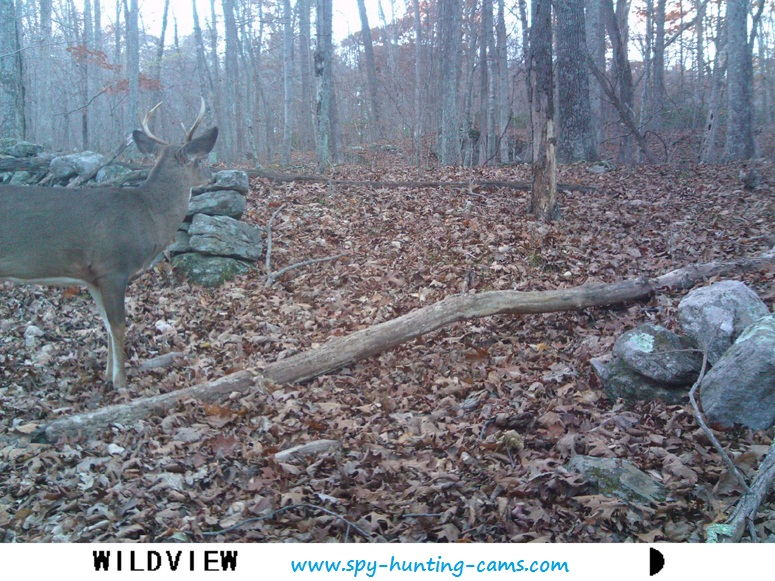 Wildview X8IR hunting game trail cam 3